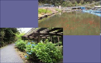 金魚池→保和苑